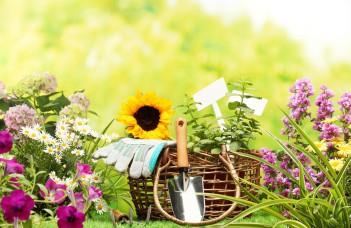 Si l'hiver n'est pas la saison la plus motivante pour jardiner, il n'en reste pas moins que de nombreuses variétés de légumes se plaisent beaucoup en hiver.