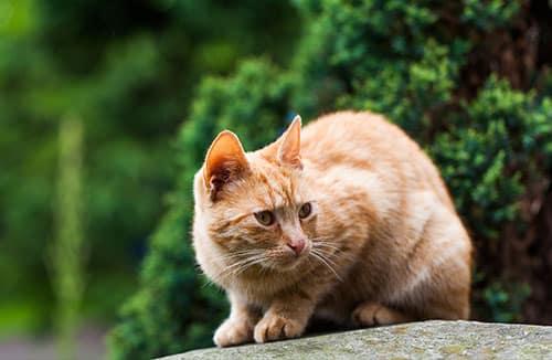 Animalerie : Un chat dans la nature avec un beau pelage - Animalerie Bricomarché