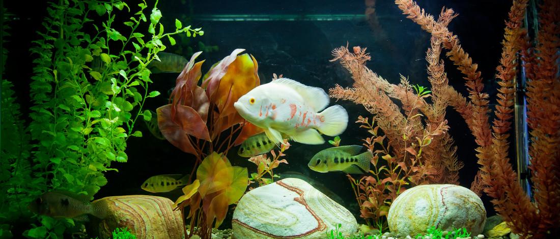animalerie aquarium