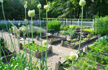 jardinage réussir potager