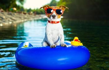 chien lunette bouée eau