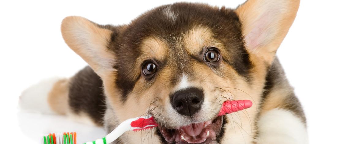 chien veterinaire