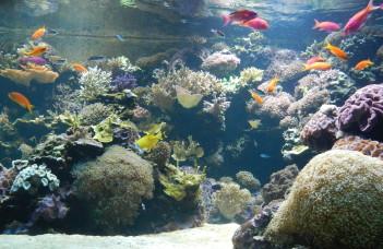 Un aquarium propre