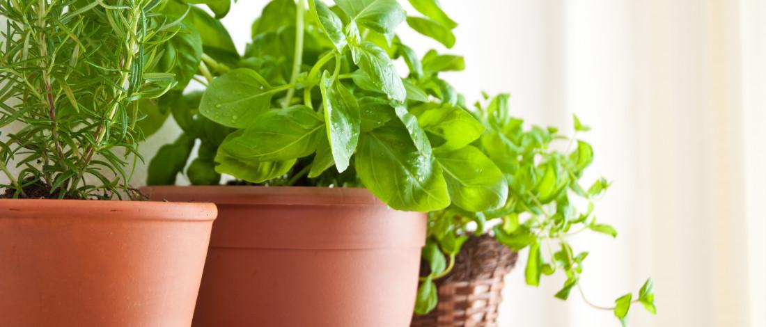 Plusieurs pots avec des herbes aromatiques