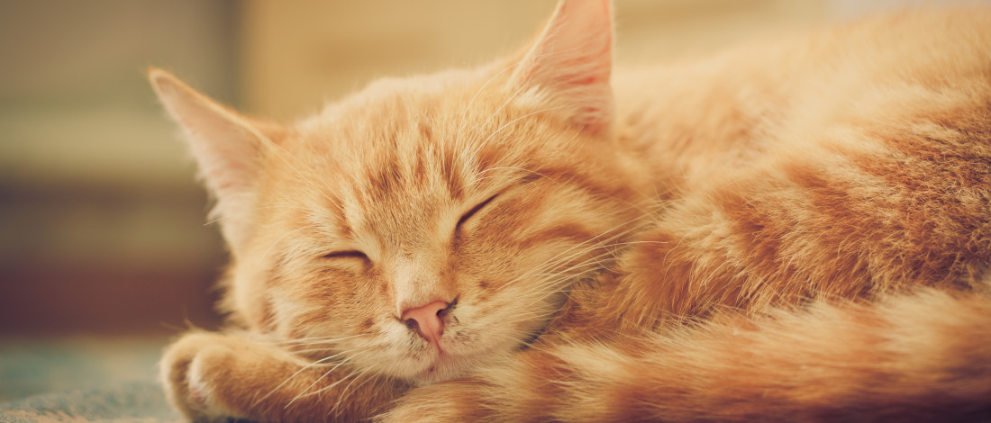 A savoir avant d'adopter un chat