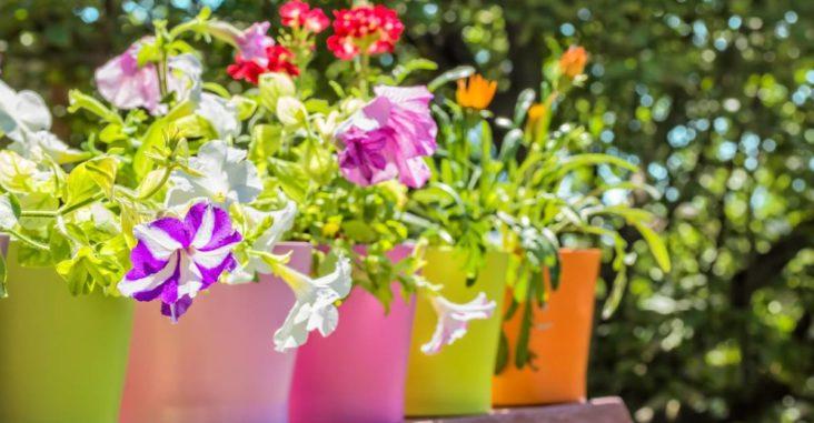 Amenager son jardin avec bricomarché